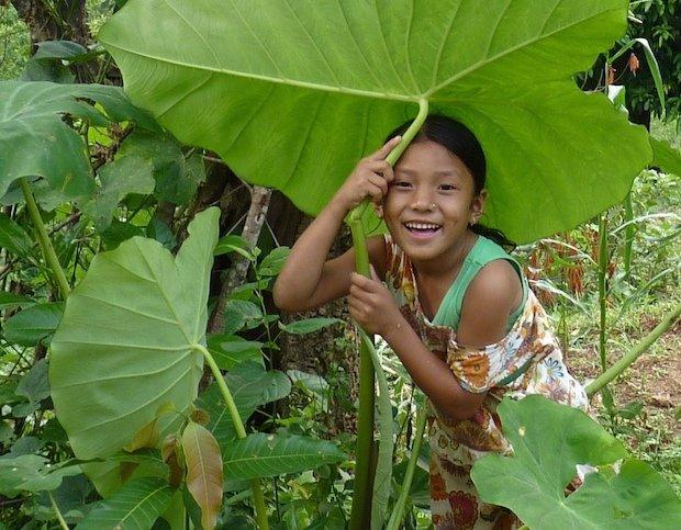 Rojina im Gemüsegarten: In den Ferien helfen dieKinder im Garten und auf den CFO-Feldern kräftig mit und so manches Gemüse wächst den Kleinsten im Monsunregen über den Kopf.